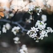 Chaque souffle est un cadeau de la Nature. Every breath is a Gift from Mother Nature. 🌸🌿🌙 #breath #blossom #naturelovers #provence #naturegift #inspire
