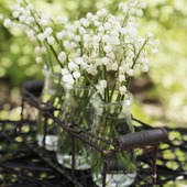 Un 1er mai rempli d'espoirs et de promesses… Wishing you the best ! 🌿🌾  #loveinstremy #nature #muguet #provence #bucolic #lilyofthevalley #diy #enjoythelittlethings #parfums