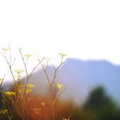 La nature 🌿 sauvage des Alpilles, forte et fragile à la fois. Notre inspiration quotidienne. #lesalpilles #wildflower #eygalieres #joliesfleurs #nature #loveinstremy #alpillesenprovence   Photo 📸 @thierryteisseire  - 🌿Fragile and strong nature in the Alpilles… you inspire us every day.